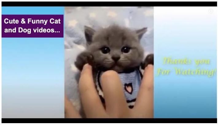 screen shot of an adorable kitten